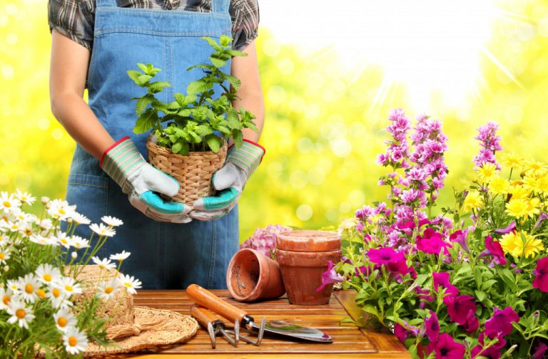woman repotting plants