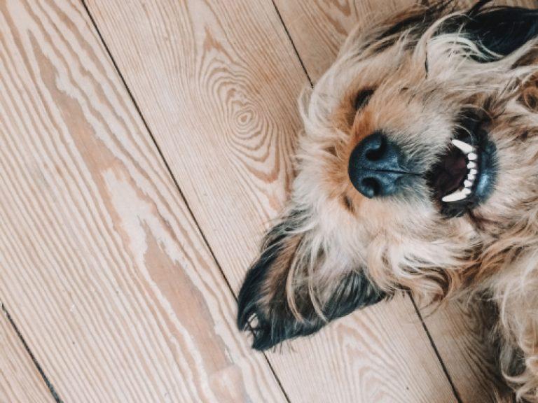 pet lying down